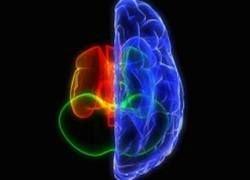 Можно ли хорошо жить с половиной мозга?