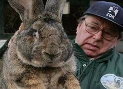 В Испанию вернется кролик-великан