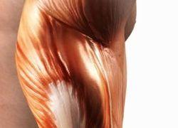Ученые создают протезы мышц