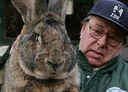 В Испании будут выращивать кроликов-великанов