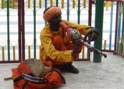 В Индии протестуют заклинатели змей