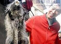 В Китае поймана гигантская крыса