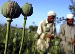 Госдума утвердила приоритеты нарковойны в Афганистане