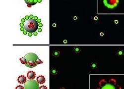 Магнитное поле превратило наночастицы в кольца Cатурна