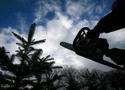 Кому выгодно уничтожение лесов в Подмосковье