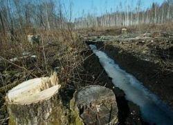 В Приморье вырубают заповедные леса