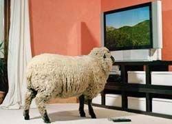 Благодаря телевидению мы снова превратимся в обезьян?