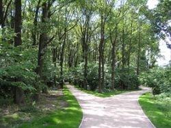 Жить вблизи парка полезно для здоровья
