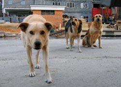 Животные, как и люди, способны планировать события на будущее
