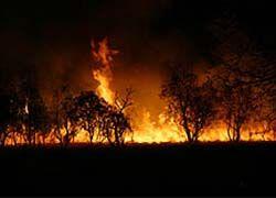 Кто виновник австралийских пожаров?
