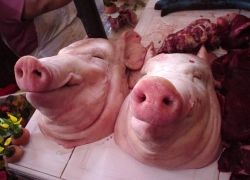 Российские мусульмане выявят свинину с помощью экспресс-тестов