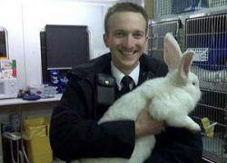 Британские полицейские 20 минут преследовали гигантского кролика