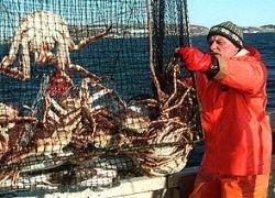За партию крабов камчатскому браконьеру грозит 10 лет тюрьмы