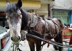 Конные экипажи в Риме заменят электромобилями
