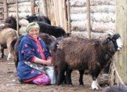 Жилищные условия в монгольской степи