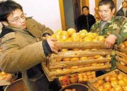 Китайский студент оплатил учебу мандаринами