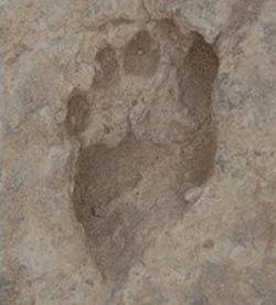 Найдены самые древние следы человека