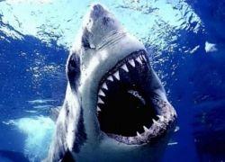 Мечта млекопитающих о регенерации зубов может сбыться