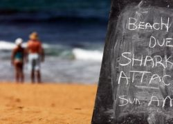 Австралийский пляж закрыли после нападения акул