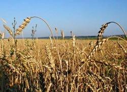 PepsiCo выделила 300 млн рублей фермерам юга России