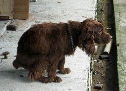 Нерадивого соседа найдут по собачьим экскрементам