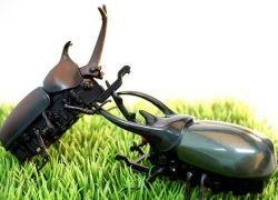 Ученые создали летающих роботов-жуков