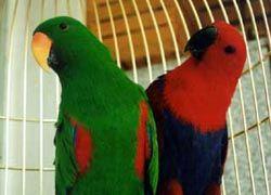 Попугаи научили хозяина говорить
