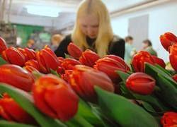 Лучшим подарком на 8 марта по-прежнему считаются цветы