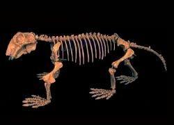 Новые данные изменили расписание Великого вымирания видов