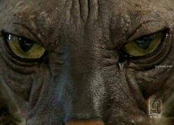 Самый уродливый кот в мире