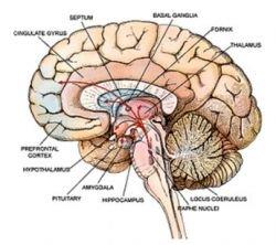 Необходим ли мозг для сознания и мышления?