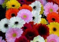 Изъята гигантская партия контрабандных цветов
