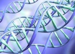 Выявлен ген, связанный с раком поджелудочной железы