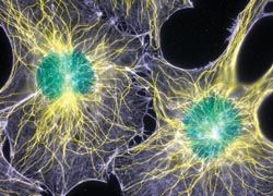 Шотландцы вырастили cеть из неорганических микротрубок