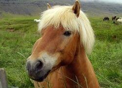 Начало одомашниванию лошадей было положено в Казахстане