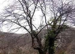"""Новый вид дерева назвали \""""Парковка запрещена\"""""""