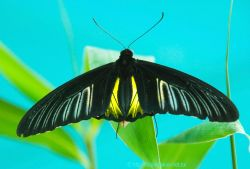 Бабочки помогают избавиться от стресса