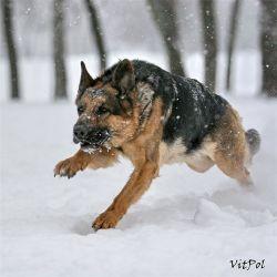 Собака, пропавшая 9 лет назад, вернулась к хозяевам