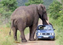Парк Крюгер - национальная гордость Южной Африки