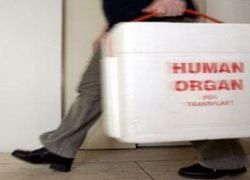 Китайцы заработают на продаже органов смертников