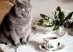 Можно ли спастись с помощью чая и кофе от инсульта?