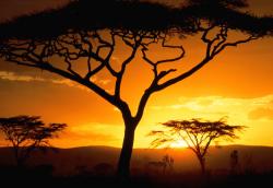 При столкновении поездов в Танзании погибли 15 человек