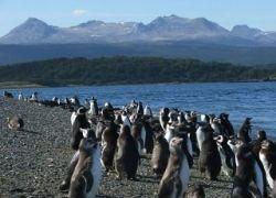 Несколько сотен мертвых пингвинов найдены на юге Чили