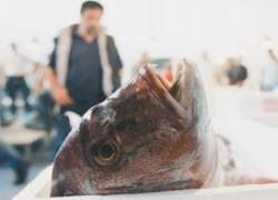 Ветеринары определили, какая рыба является безопасной