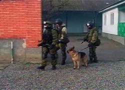 ФСБ стало известно о подготовке терактов в Ингушетии