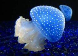 Светлячки и медузы помогут понять причины бесплодия