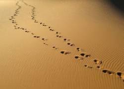 В Марокко стартовал 220-километровый марафон по Сахаре