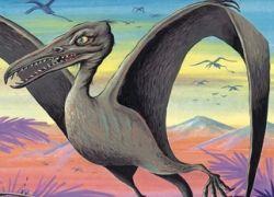 Крылья динозавров могли вырасти от любви