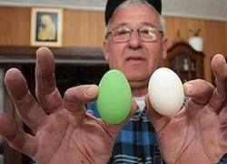 """Хорватская курица научилась нести \""""пасхальные\"""" яйца"""
