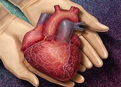 Сердце может самовосстанавливаться после инфаркта